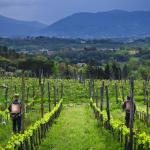 Cooperativa agricola e sociale Calafata (Arcidiocesi di Lucca, coinvolgendo i territori dei Comuni di Lucca e Capannori • Lucca)
