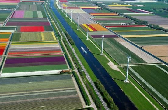 Fig 10_Campi di tulipani e energia eolica